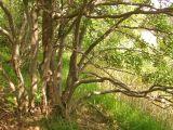 Nach Rödjan auf Älgö - auch ein Naturschutzgebiet