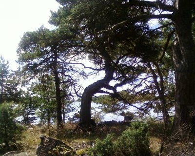 Kiefern, Vögel, Felsen, Sonne, Wasser und Wind: ich bin auf Katanpää